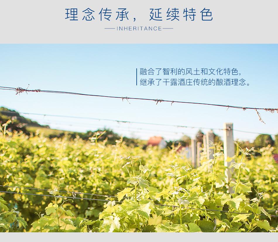 2013年干露羊驼霞多丽白葡萄酒亮点图2