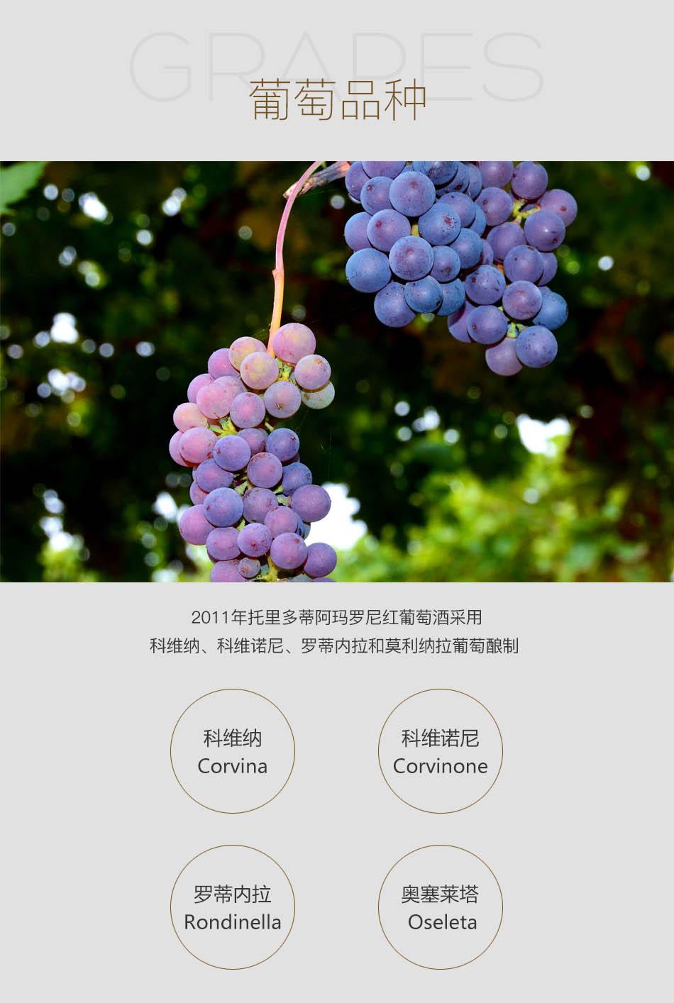 2011年托里多蒂阿玛罗尼红葡萄酒--葡萄品种