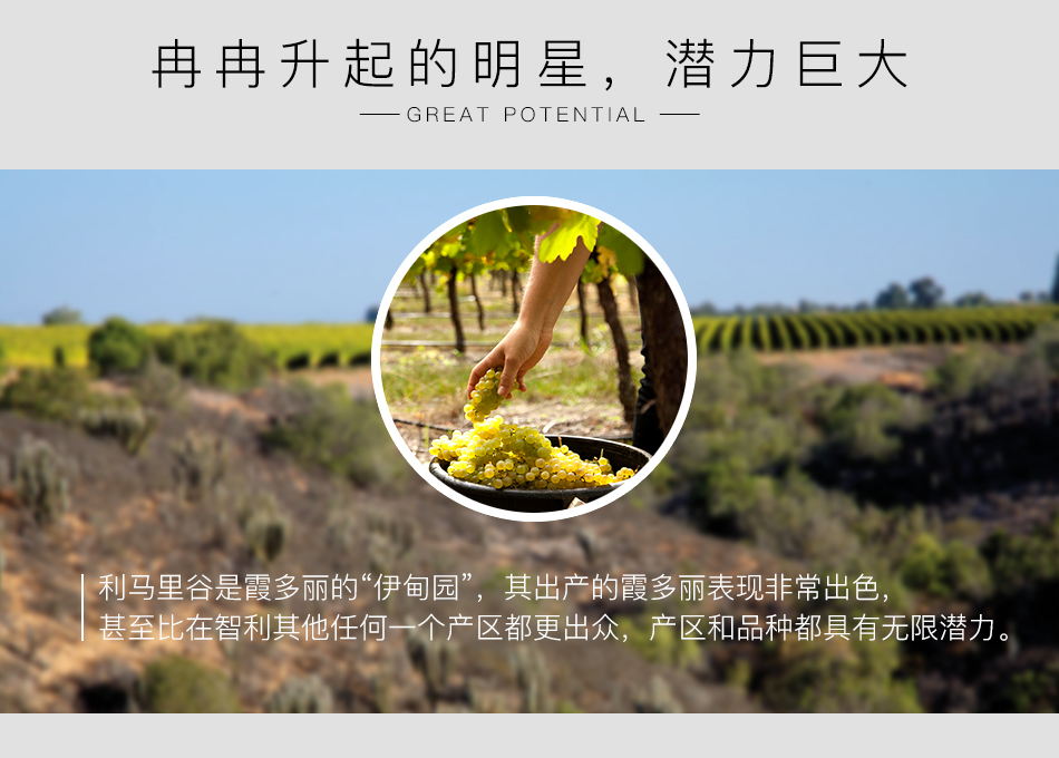 2013年麦卡斯珍藏霞多丽白葡萄酒亮点图2